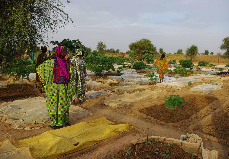 Pérmimètres maraichers, Mali.